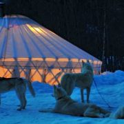 camping christmas gift dog night